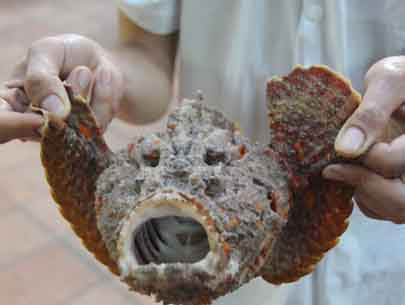 Stonefish in Qua Ngon Restaurant