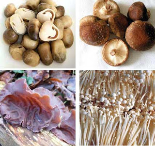 Other types of mushrooms