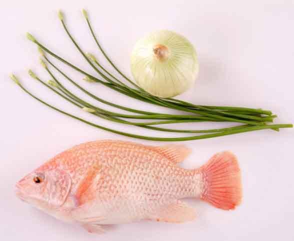 Cá điêu hồng