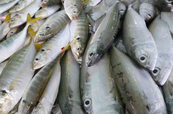 Cách bảo quản cá