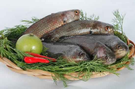 Cách chọn cá ngon