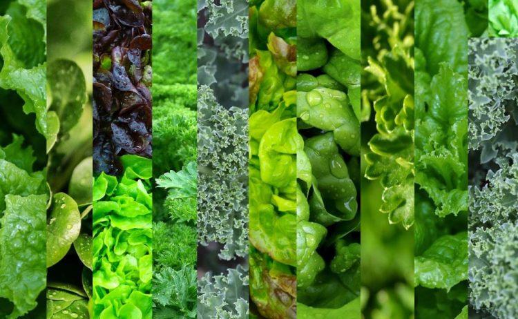 Họ nhà cải: các loại cải xanh, cải bắp và rau cải có màu xanh lá đậm